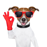 Ok Fingers Dog Photographic Print by Javier Brosch