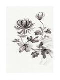 Chrysanthemum Flower Plakater af  Surovtseva