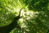 Pathway in the Forest with Sunlight Fotodruck von Kalina Vova