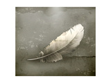 Feather, Old-Style Poster by Nataliia Natykach