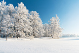 Winter Park in Snow Photographic Print by  Hydromet