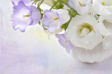 White and Lilac Flowers in a Vase Photographic Print by  egal