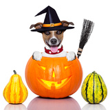 Halloween Dog as Witch Photographic Print by Javier Brosch