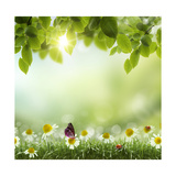 Spring or Summer Season Abstract Nature Background with Grass and Blue Sky in the Back Print by Krivosheev Vitaly