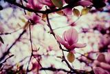 Magnolia Flowers Photo by  Roxana_ro
