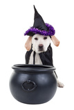 Halloween Dog Photographic Print by Stephanie Zieber