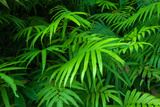 Ferns Leaves Green Foliage Tropical Background Posters by  SergWSQ