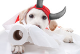 Halloween Devil Dog Photographic Print by Stephanie Zieber