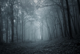 Deep Dark Forest with Thick Forest in Late Autumn Photographic Print by  ando6