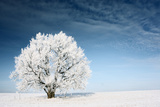 Frozen Tree on Winter Field and Blue Sky Posters by Dudarev Mikhail