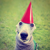 A Cute Dog in a Local Park with a Birthday Hat Photographic Print by  graphicphoto