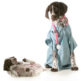 Veterinary Care - German Shorthaired Pointer Dressed as a Veterinarian Looking after Sick Puppy Posters by Willee Cole