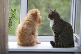 Cat and Dog on the Window Photographic Print by  Okssi