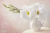 White Flowers in a Vase Photographic Print by  egal