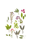 Herbs and Flowers of Summer Prints by  marilyna