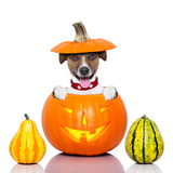 Halloween Dog Prints by Javier Brosch