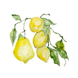 Branch of Ripe Sour Lemons Prints by  vilax