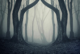 Dark Forest Scene with Fog and Twin Trees on Halloween Photographic Print by  ando6