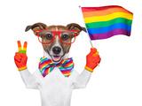 Gay Pride Dog Fotografisk tryk af Javier Brosch