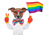 Gay Pride Dog Photographic Print by Javier Brosch