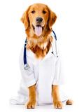 Dog Dressed as a Doctor or Vet Fotografisk tryk af andres