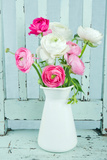 White and Pink Ranunculus Flowers Print by Anna-Mari West