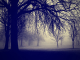 A Very Foggy Day in the Park Reproduction photographique par  graphicphoto