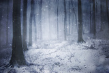 Blizzard in a Dark Forest with Fog in Winter Photographic Print by  ando6