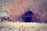 An Old Barn Surrounded by Trees Prints by  graphicphoto