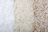 Three Rows of Rice Varieties Photographic Print by  felker