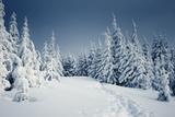 Winter Landscape Fotografisk trykk av  Kotenko