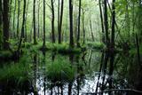 Forest Swamp Photo by  ONiONAstudio