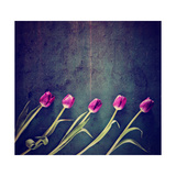 Tulips on a Wooden Board Print by  graphicphoto