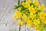 Wild Yellow Flowers Closeup on Rustic Wooden Background Photographic Print by  Marylooo