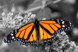 Brilliant Butterfly Fotodruck von  Beth B.