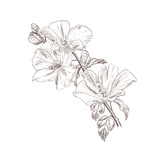Hand Drawing Hibiscus Flower Poster by  Acnaleksy