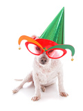 Pet with Party Hat and Court Jester Glasses Prints by  lovleah