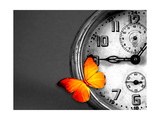 Orange Butterfly Resting over an Old Vintage Clock Art by  Photosani