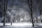 Winter Park in the Evening Covered with Snow with a Row of Lamps Posters by  Olegkalina