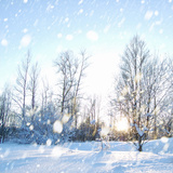 Winter Landscape with Snow Photographic Print by  IgorKovalchuk