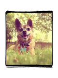 A Cute Chihuahua in the Grass Print by  graphicphoto