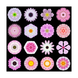 Big Collection of Various Pink Pattern Flowers Premium Giclee Print by  tr3gi