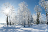 Beautiful Winter Landscape with Snow Covered Trees Fotografisk tryk af Leonid Tit