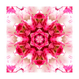 Pink Concentric Flower Center: Mandala Kaleidoscopic Posters by  tr3gi
