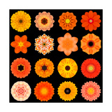 Big Collection of Various Orange Pattern Flowers Prints by  tr3gi