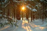 Paysage hivernal Reproduction photographique par  Yanika