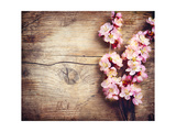 Spring Blossom over Wood Background Prints by Subbotina Anna