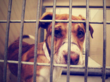 A Stray Dog at the Pound or Shelter Photo by  graphicphoto