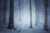 Snow Storm in a Forest with Fog in Winter Posters by  ando6