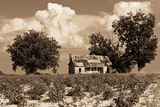 Rustic Shack in Middle of Cotton Field in Southern Alabama Kunstdrucke von Rob Hainer